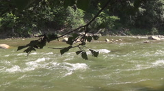 The Prut river Stock Footage