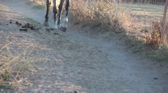 Horse pacing, hooves and legs Stock Footage