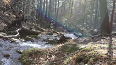 Beautiful Forest and Stream of Drinkable Water Stock Footage