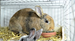 Two rabbits eating Stock Footage