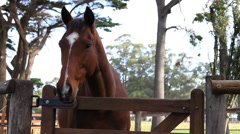 Beautiful Friendly Horse Stock Footage
