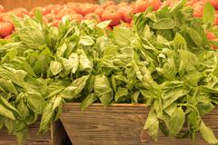 Fresh basil herb at the market faded Stock Photos