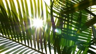 Stock Video Footage of Closeup on Green Palm Leaves with Sun. Slow Motion.