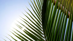 Bright Sun Light Through Exotic Foliage of Palm Leaf. Stock Footage