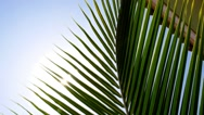 Stock Video Footage of Bright Sun Light Through Exotic Foliage of Palm Leaf.