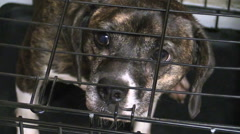 A pitiful little dog in a cage looking very sad Stock Footage