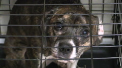 Dog in looking miserable in cage Stock Footage
