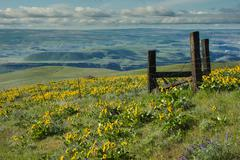 Stock Photo of scenic vista of green hills with wildflowers