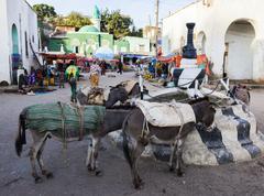 harar, ethiopia - december 24, 2013: donkeys wait to be loaded on market squa - stock photo