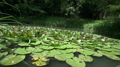 Small lake with water lily Stock Footage