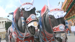 Decorated Oktoberfest Horses Stock Footage