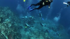 Different groups of scuba divers make for busy diving underwater Stock Footage