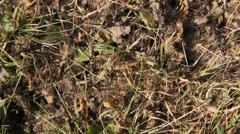 Many ants crawling over an ant hill Stock Footage