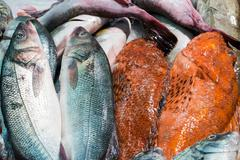 Fish at the market Stock Photos