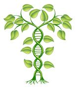 dna plant concept - stock illustration