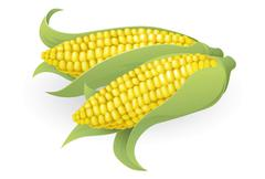 tasty sweetcorn illustration - stock illustration