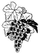 Grapes on grapevine Stock Illustration