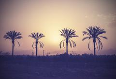 vintage stylized palm trees silhouettes at sunset. - stock photo