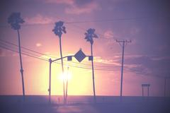 Vintage dimmed sunset picture of palms and poles on street against sun. Stock Photos