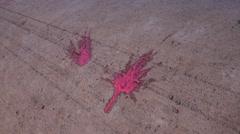 Splattered Paintballs 2 Stock Footage