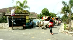 Oxcart parade to celebrate the independence of Indonesia in Yogyakarta Stock Footage