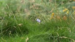 Wild Flowers and Grasses Nature Background Hairbell Stock Footage