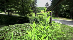 Mother drive her baby near the lake full of plants and animals Stock Footage
