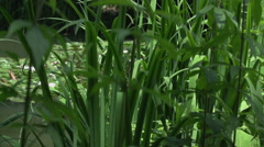 Plants near the lake Stock Footage