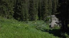 Green mountain meadow in forest wildflowers 4K 053 Stock Footage