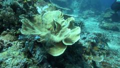Beautiful coral reef garden Stock Footage