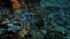 Soft corals and sea squirts on ocean floor Stock Footage