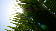 Closeup of Green Palm Leaf with Sun. Slow Motion. Stock Footage