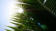 Stock Video Footage of Closeup of Green Palm Leaf with Sun. Slow Motion.