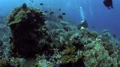 Scuba divers exploring lively coral reef Stock Footage