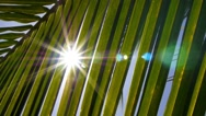 Stock Video Footage of Male Hand Reaching the Sun through Palm Leaves. Slow Motion.