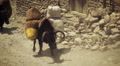 Black ox carrying supplies in Nepal. HD Footage