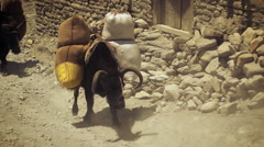 Black ox carrying supplies in Nepal. Stock Footage