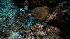 Moray eel in coral reef underwater Stock Footage