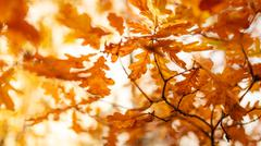 Autumnal leaves background Stock Photos