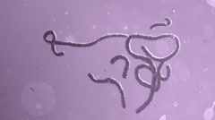 Ebola moving in violet background Stock Footage