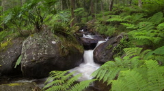 Small water stream with waterfall flows along stones and rocks in forest Stock Footage