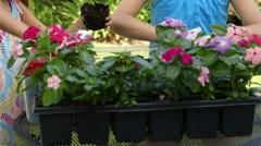 Tilt to little girls planting flowers Stock Footage