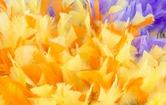 Yellow purple feather background Stock Photos