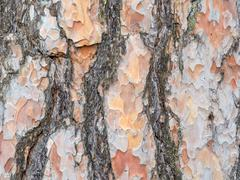 Bark texture background scots pine Stock Photos