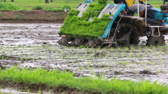 Farmer Riding Transplanter Car Plant Rice Sprouts In farm Stock Footage