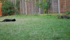 Tabby & Black Cat Play fighting in Garden Stock Footage