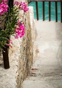 Walkpath through a flourishing seaside garden - stock photo