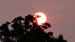 2056 Sun Setting Behind Trees Time Lapse, HD - stock footage