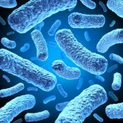 Bacteria Stock Illustration