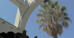 Palm Tree in the sun Stock Footage